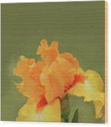 Yellow Iris Pillow Wood Print