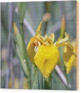 Yellow Iris Wild Flower Wood Print