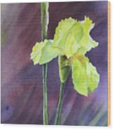 Yellow Iris Wood Print
