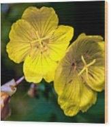 Yellow Is Gold Among The Flowers Wood Print
