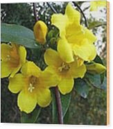Yellow Jasmine Wood Print