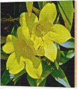 Yellow Jessamine At Pilgrim Place In Claremont-california Wood Print