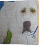 Yellow Labrador Retriever Original Acrylic Painting Wood Print