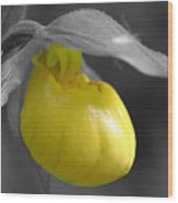 Yellow Lady Slipper Partial Wood Print