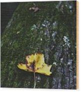 Yellow Leaf On Mossy Tree Wood Print
