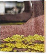 Yellow Lichen Wood Print