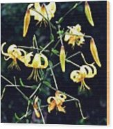 Yellow Lilies In Fort Tryon Park Wood Print