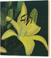 Yellow Lilly Wood Print