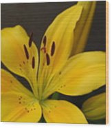Yellow Lily 1 Wood Print