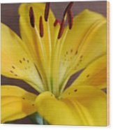Yellow Lily 2 Wood Print