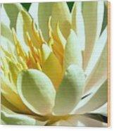 Yellow Lily Burst Wood Print