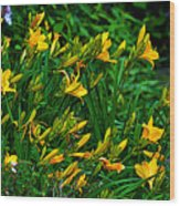 Yellow Lily Flowers Wood Print
