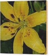 Yellow Lily Wood Print