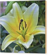 Yellow Lily Longwood Gardens Wood Print