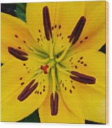 Yellow Lily Wood Print