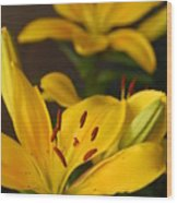 Yellow Lily Mirror Wood Print