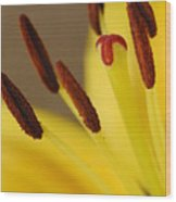 Yellow Lily Reach 2 Wood Print