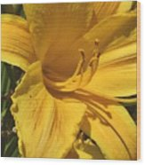 Yellow Lily Shines Brightly  Wood Print