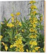 Yellow Loosestrife Wood Print
