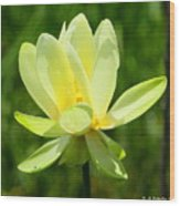 Yellow Lotus Wood Print