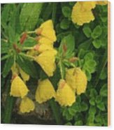 Yellow Lungwort 3 Wood Print