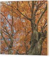Yellow Maple Tree Wood Print