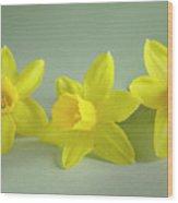 Yellow Mini Narcissus Wood Print