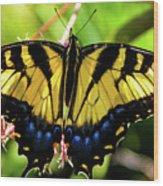 Yellow Monarch Butterfly On Milkweed #2 Wood Print