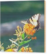 Yellow Monarch Butterfly Wood Print