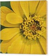Yellow Monastery Zinnia Wood Print