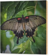 Yellow Mormon Wood Print