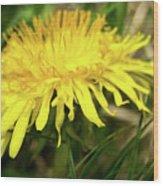 Yellow Mountain Flower's Petals Wood Print