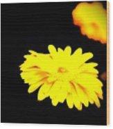 Yellow Mum On Black Backround Wood Print