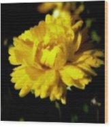 Yellow Mum With Raindrops Wood Print