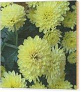 Yellow Mums Wood Print