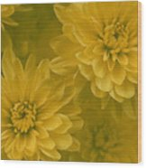 Yellow Mums Wood Print