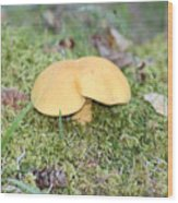 Yellow Mushroom Wood Print