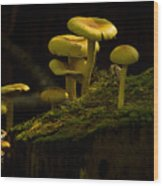 Yellow Mushrooms Wood Print