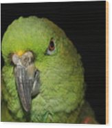 Yellow-naped Amazon Parrot Wood Print