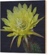 Yellow Night Blooming Cactus  Wood Print