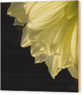 Yellow On Black Wood Print by Ron Hoggard