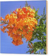 Yellow-orange Horn Flowers 01 Wood Print