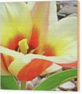 Yellow Orange Tulip Flower Art Print Baslee Troutman Wood Print