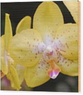 Yellow Orchid 2 Wood Print