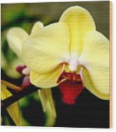 Yellow Orchid Wood Print