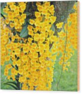 Yellow Orchids Wood Print