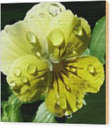 Yellow Pansy Wood Print