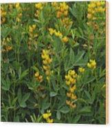 Yellow Pea 1 Wood Print