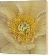 Yellow Peony Wood Print