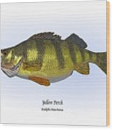 Yellow Perch Wood Print